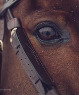 BBLINK Dy´on klapky na oči